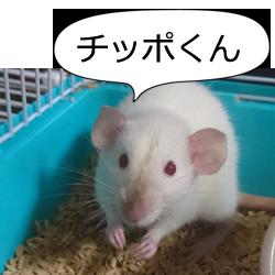 ネズミのチッポくん