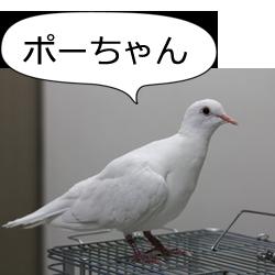 鳩のポーちゃん